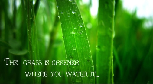 the-grass-is-greener-
